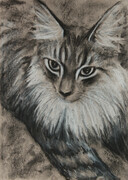 Maine Coon 12X9 charcoal