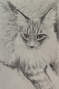 Maine Coon Sketch